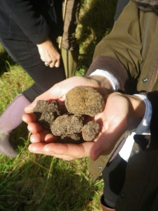 The results of a 2016/17 season truffle hunt.