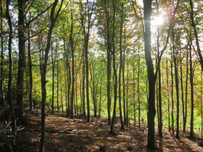 A glorious day to be in the woods - bright sunshine and Autumn leaves (plus truffles!)