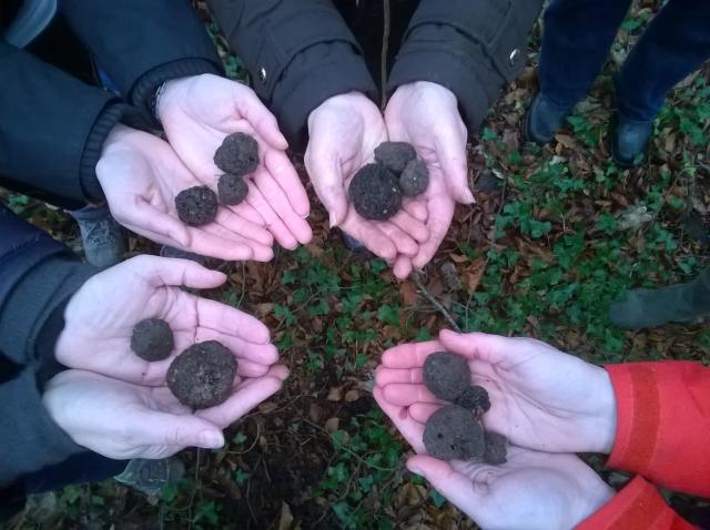 Hands full of truffles
