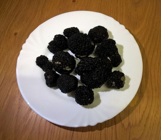 A nice plate of truffles from a Wiltshire 2018 hunt.