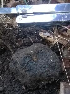 A good size English Autumn truffle