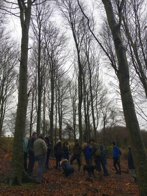 Winter in the truffle wood.