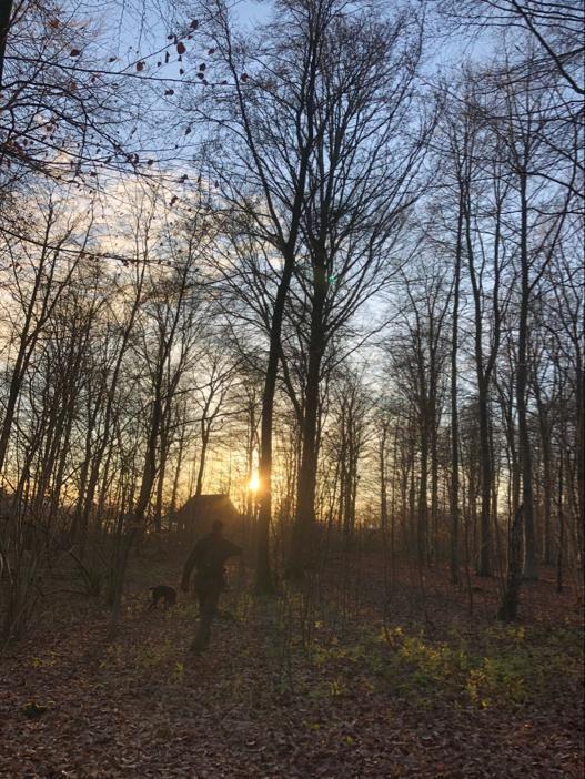 Truffle hunting towards the winter setting sun.
