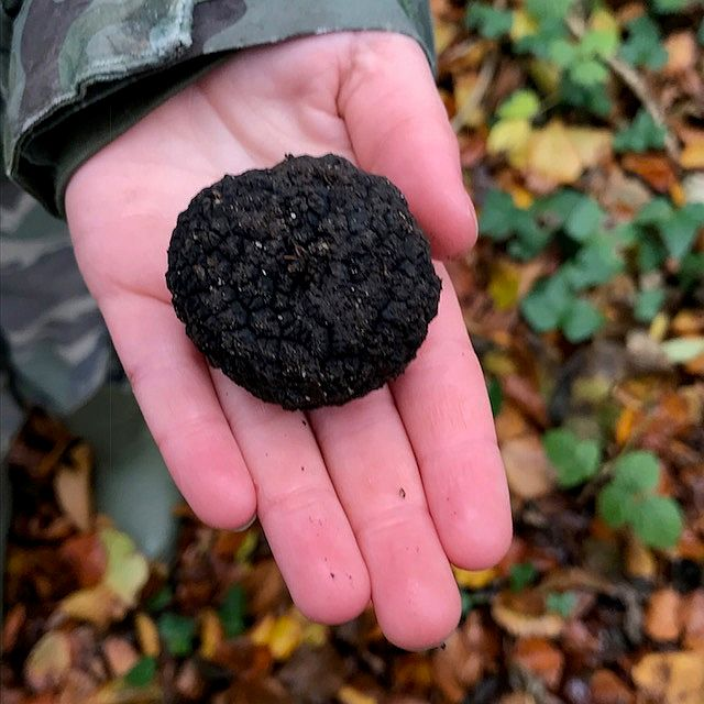 Good size truffle