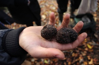 Woodland owners - have you got valuable truffles in your woodland?