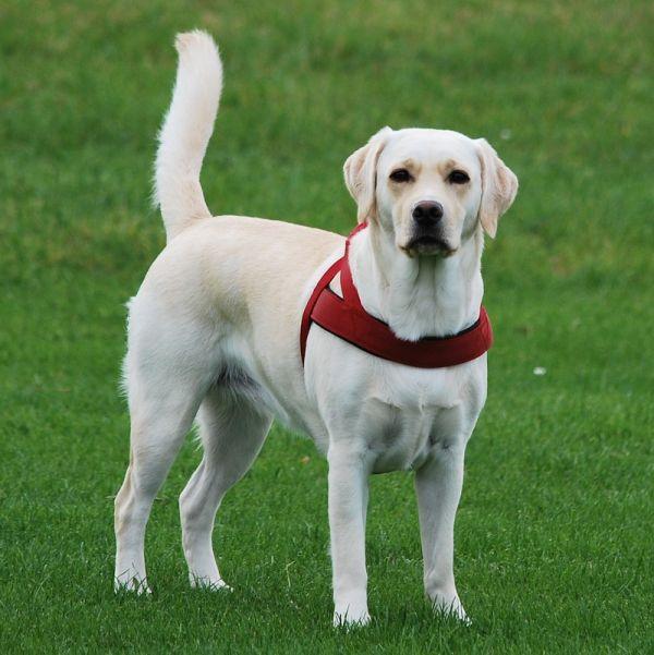 Truffle Dog Training Uk