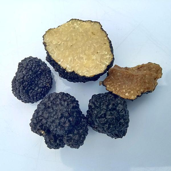 Dog training truffles