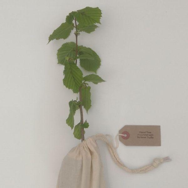 Truffle Tree Gift Voucher