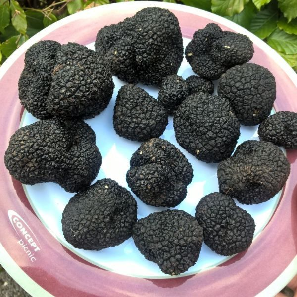English Black Truffles