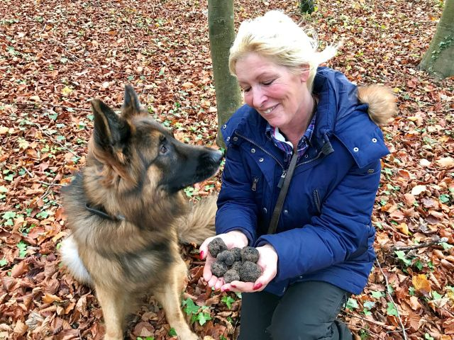 "Woodland lesson - Malik's first truffles (all 8 of them!) - delighted ""Mum""."