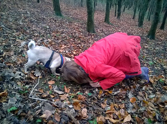 Woodland lesson: Welly has indicated, Hannah sniffing to see if he is right.
