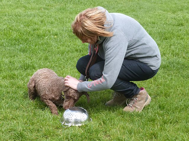 Workshop: Lenny the Water Water Dog, indicates he has found the truffle scent with a down.