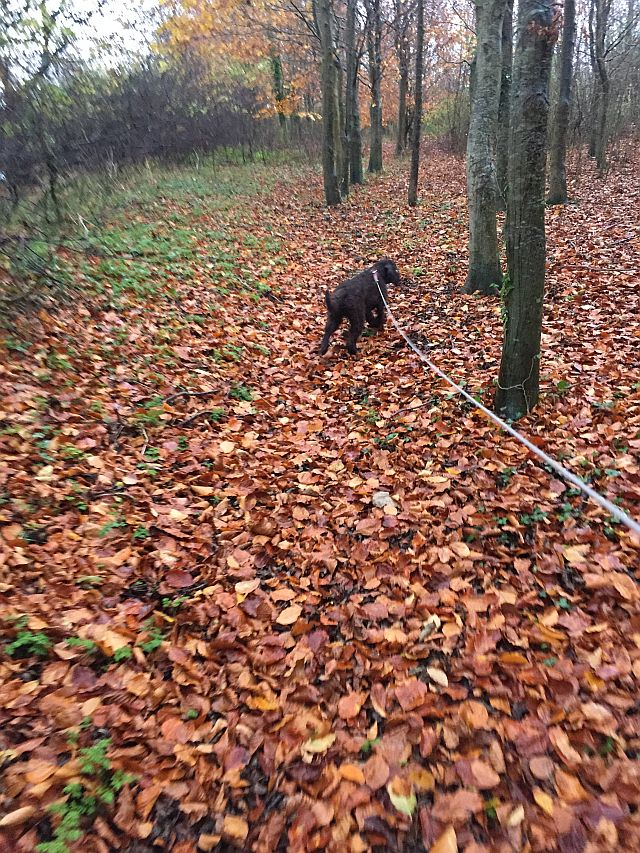 Woodland lesson: Charlie on the scent.