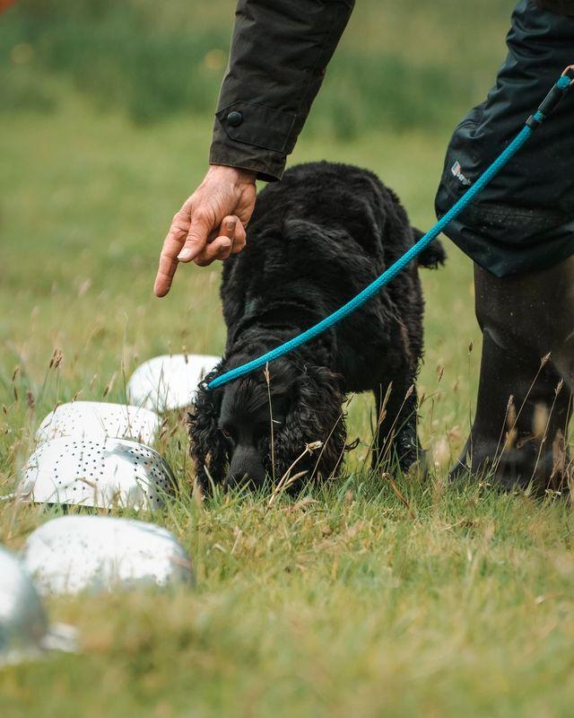 Truffle dog training workshop