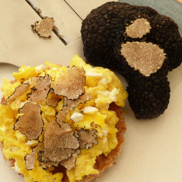 Truffled Scrambled Egg
