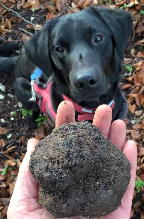 Truffle Hound and 270g truffle.