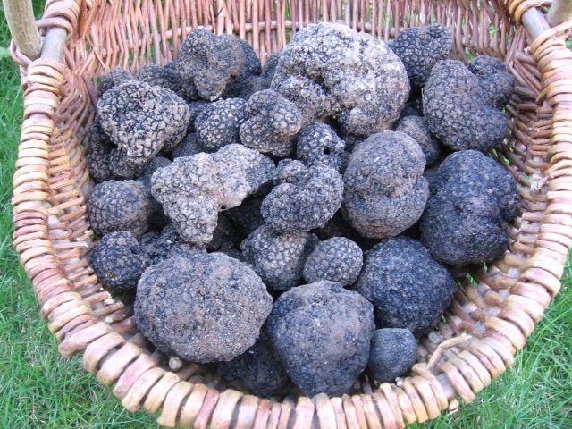 basket of english truffles