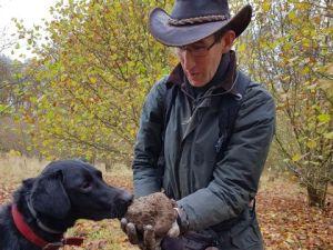 truffle orchard hire hound dog