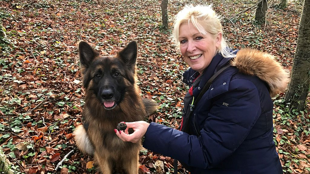 English Truffle Company truffle dog training