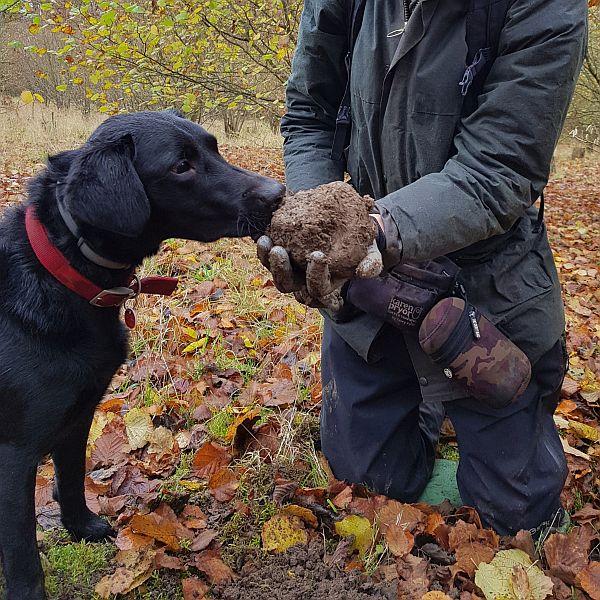 Truffle orchard plantation dog hound hire rent