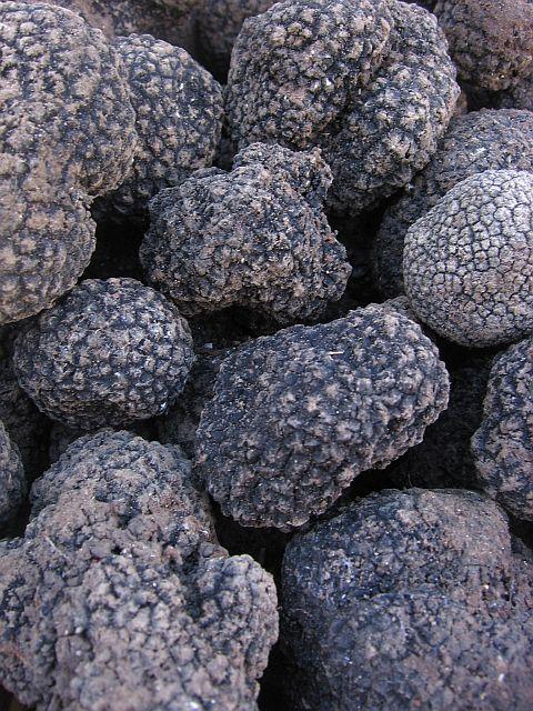 english autumn black truffles