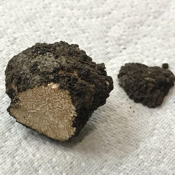 Truffle found in garden inside the M25