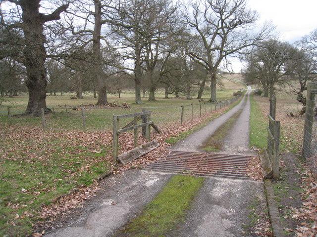 Cattle grid - Hackwood Park