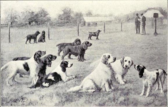 Group of Gun Dogs from 1915
