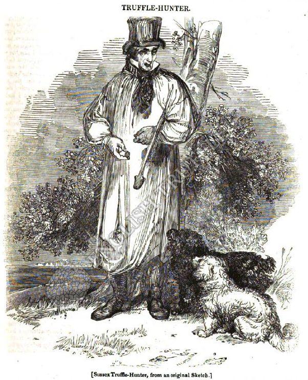 Sussex Truffle Hunter