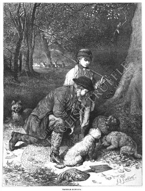 Truffle Hunting G.B. Goddard